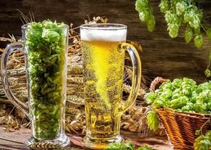 efectele consumului moderat de bere